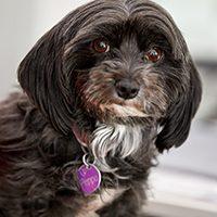 Peppa, Hund, Team, Softwareentwicklungs-Service, Software-Qualitätssicherung